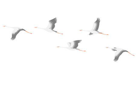 Simplified image of flying storks isolated on white. Bird flight flat illustration.