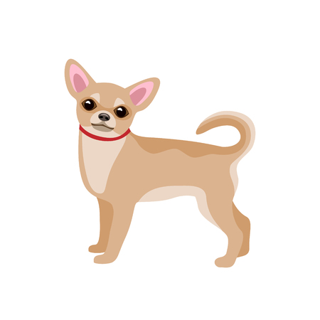 Small Dog Chihuahua isolated on white background. Vector flat illustration. Ilustrace