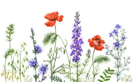 Hand getrokken wilde bloemen. Waterverfwildflowers op witte achtergrond. Kleur bloemenrand. Stockfoto