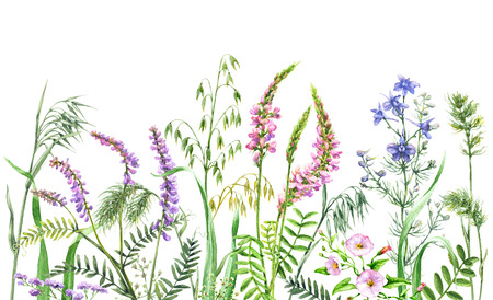 Hand drawn wild flowers. Watercolor wildflowers on white background. Color floral border. Archivio Fotografico