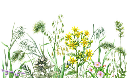 Hand drawn wildflowers. Watercolor flowers, wild oats and green grass on white background. Colored floral border.