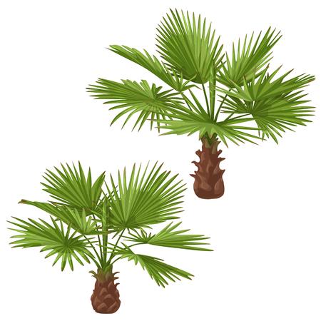 Palm trees isolated on white background. Washingtonia green fan-shaped fronds. Vector  flat illustration. 版權商用圖片 - 86208084