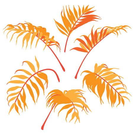 Palm fronds isolated on white background. Orange leaves set. Vector flat illustration.