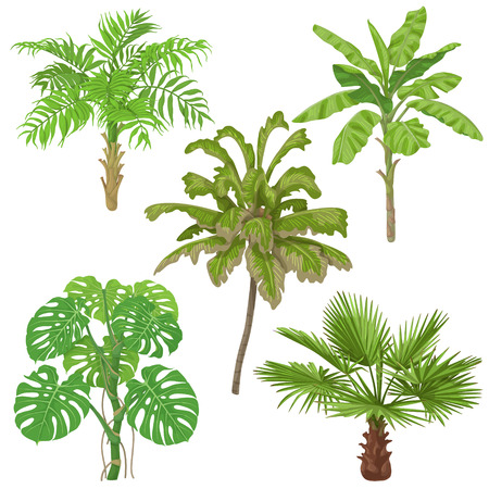 Tropical plants set. Palm trees, banana plant, washingtonia, monstera isolated on white background.
