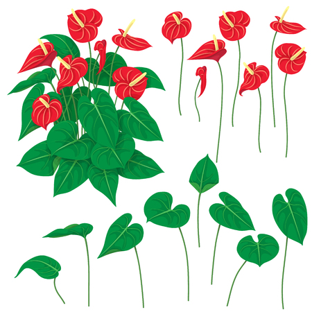 Separate elements and bunch of Anthurium isolated on white background.