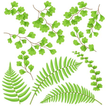 熱帯植物の枝や葉がセット。グリーンファーン葉は白に分離しました。ベクターフラットイラスト。