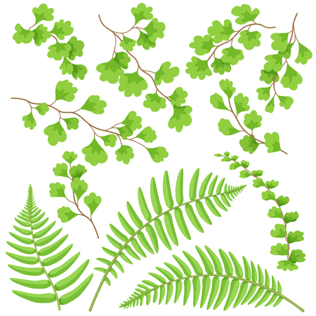 Branches and leaves of tropical plants set. Green fern fronds isolated on white. Vector flat illustration.