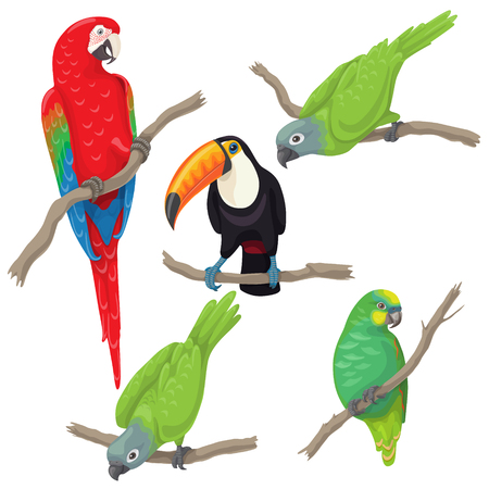 Vivid tropical birds set. Green parrots, red-and-green macaw and toucan sitting on branches isolated on white background.