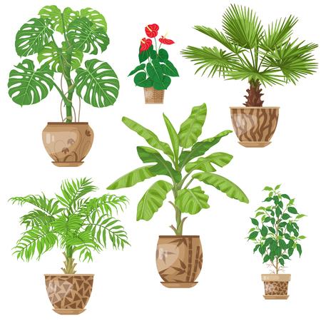 화분 된 열대 식물 세트. 야자수, 바나나 플랜트, 안 스리 움, ficus, washingtonia, 화이트 절연 flowerpots에서 monstera. 벡터 플랫 그림입니다.