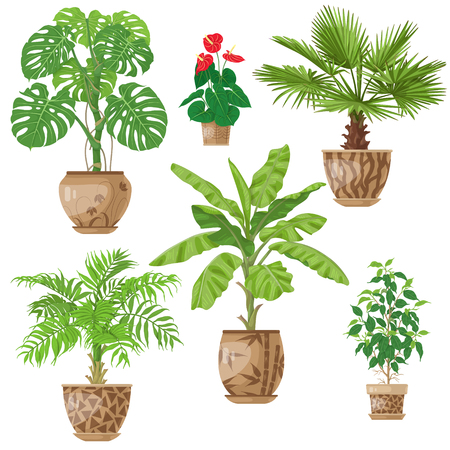 Eingemachte tropische Pflanzen eingestellt. Palmen, Bananenstaude, Anthurium, Ficus, Washingtonia, monstera in den Blumentöpfen lokalisiert auf Weiß. Vektor flache Abbildung. Standard-Bild - 89823539
