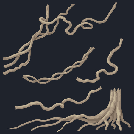 Liana branches set and tree stump with roots isolated on dark background. Woody climbing plant of tropical rainforest.