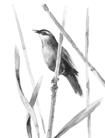 Watercolor painting.  Hand drawn illustration. Aquarelle sketch marsh bird sitting on reed stalk isolated on white.  Stock Photo