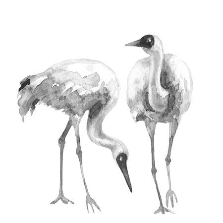 水彩画。 手描きのイラスト。カップル シベリア クレーンは、白で隔離。長い首を持つ渉禽の白黒のスケッチ。