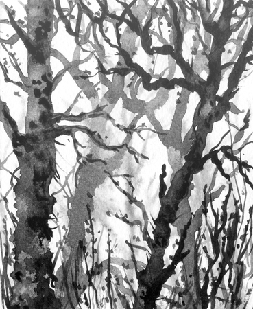 Watercolor painting.  Hand drawn illustration. Winter forest scene. Monochrome image of old trees without leaves in mist.