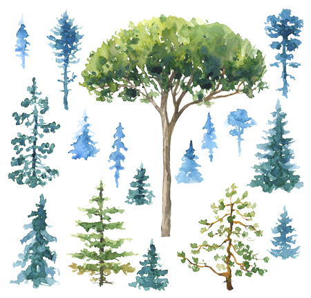Watercolor painting. Hand drawn illustration. Set of conifers and evergreen trees isolated on white.  Stock Photo