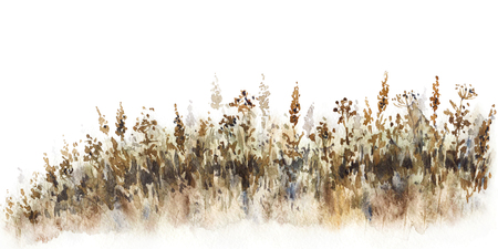Watercolor painting. Hand drawn illustration. Fading field grass sketch.  Nature scene design element.