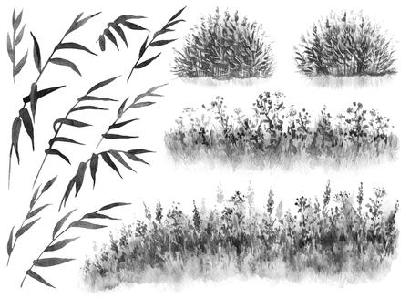 Aquarel schilderij. Hand getekende illustratie. Set monochrome riettakken, rietstruikgewas en gras. Natuur scène ontwerpelement.