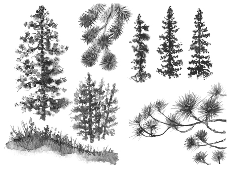 Watercolor painting. Hand drawn illustration. Set of silhouettes conifers isolated on white. Evergreen trees branches sketch. Nature scene  design element.