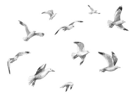 Pintura aquarela. Mão desenhada ilustração animalesca. Bando de gaivotas a voar. Esboço Aquarelle de movimento de vôo de gaivotas. Pássaros monocromáticos isolados no branco.