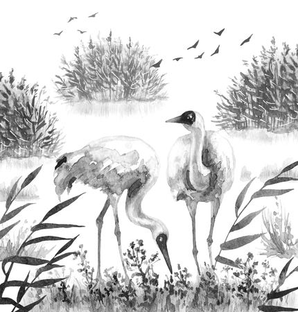 Watercolor painting.  Hand drawn illustration. Couple Siberian Cranes in reeds.  Monochrome wetland scene with wading bird. Cane thicket and grass in mist. Archivio Fotografico