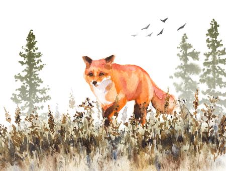 Aquarel schilderij. Hand getekend dierlijke illustratie. Rode vos die op langzaam verdwijnende weide loopt. De herfstscène met wilde roofdiermotie, sparren in mist en droog gras.