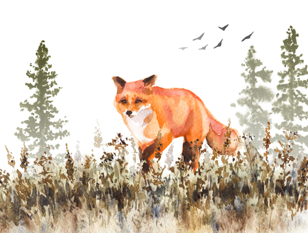 Peinture à l'aquarelle. Illustration animale dessinée à la main. Renard roux marchant sur une prairie décolorée. Scène d'automne avec mouvement de prédateur sauvage, sapins dans la brume et herbe séchée. Banque d'images - 92031788