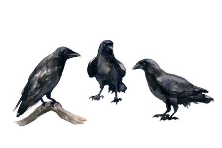 Aquarellmalerei . Handgezeichnete Illustration . Drei schwarze Krähen lokalisiert auf weißem Hintergrund . Vögel fliegen und Rabe auf Baum Skizze sitzen