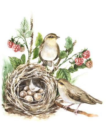 Aquarel schilderij. Hand getekend dierlijke illustratie. Paarzangvogels en nest met eieren op wit worden geïsoleerd dat. Vogel familie aquarelle schets. Vogels huis op grond verborgen in gras en frambozen plant.