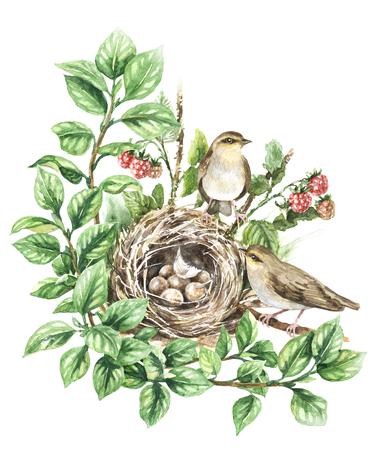 Peinture à l'aquarelle. Illustration animale dessinée à la main. Couple d'oiseaux chanteurs et nid avec des oeufs isolés sur blanc. La maison des oiseaux sur le sol caché dans les branches avec les feuilles vertes et la framboise. Banque d'images - 92031800