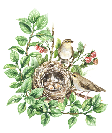 Watercolor painting. Hand drawn animalistic illustration. Couple songbirds and nest with eggs isolated on white. Birds house on ground hidden in branches with green leaves and raspberry plant.