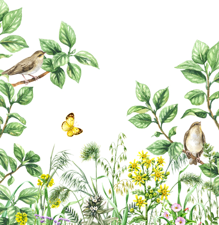 Watercolor painting.  Hand drawn illustration. Green meadow with songbird and insect. Aquarelle collage made with forest birds sitting on branches, flying yellow butterfly and wildflowers.  Stock Photo