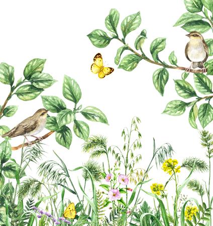 Aquarel schilderij. Hand getekende illustratie. Groene weide met zangvogels en insecten. Aquarel collage gemaakt met bosvogels zittend op takken, gele vlinders en wilde bloemen. Stockfoto - 92228165