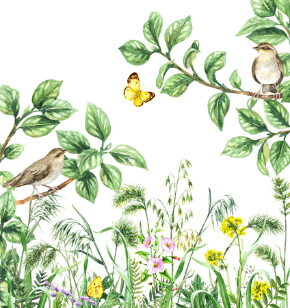 Watercolor painting.  Hand drawn illustration. Green meadow with songbirds and insects. Aquarelle collage made with forest birds sitting on branches, yellow butterflies and wildflowers.