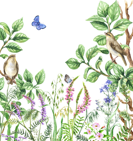 Watercolor painting.  Hand drawn illustration. Floral background  with songbirds and insects. Summer view with forest birds sitting on branches, blue butterflies and  pink wildflowers.