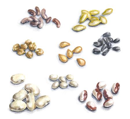 ●手描きの生食べ物イラスト。カボチャの種子、豆類、ヒマワリの種の水彩画セット。 写真素材