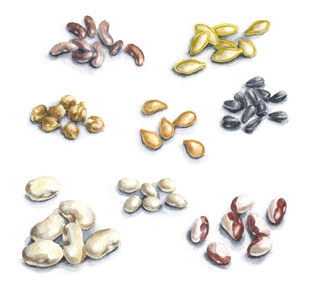 Hand drawn raw food illustration. Watercolor set of pumpkin seeds, legumes and sunflower seeds.  Stockfoto