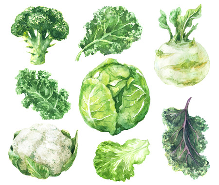Hand drawn raw food illustration. Watercolor cauliflower, broccoli, kale, kohlrabi and salad leaf isolated on white background. Variety cabbages set. Banco de Imagens