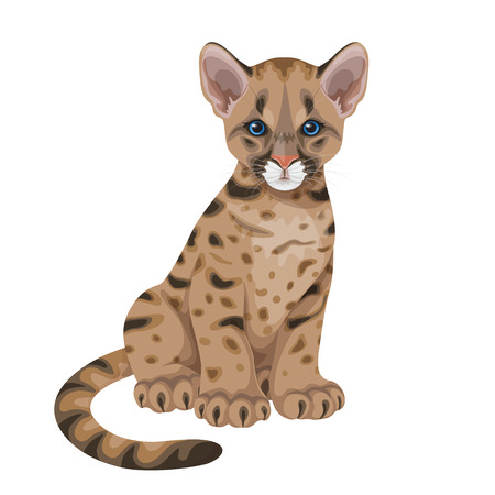 Little spotted puma with blue eyes, young American mountain lion isolated on white. Cougar cub  flat illustration.