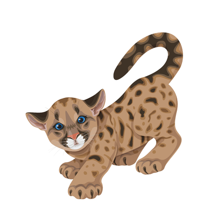 Little spotted puma  with blue eyes.Young American mountain lion  in  motion before jump  isolated on white. Cute cougar cub vector flat illustration.