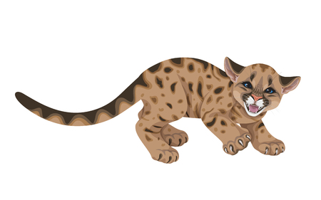 Little spotted angry animal with long tail.Young hissing American mountain lion isolated on white. Cute cougar cub vector flat illustration.