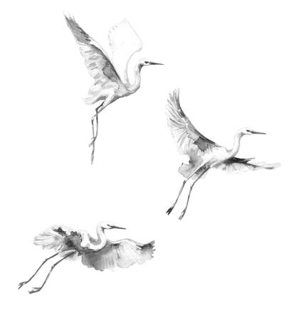 水彩画。 手描きのイラスト。白い飛行のコウノトリは空白の背景に分離します。鳥フライト白黒 aquarelle スケッチ。 写真素材