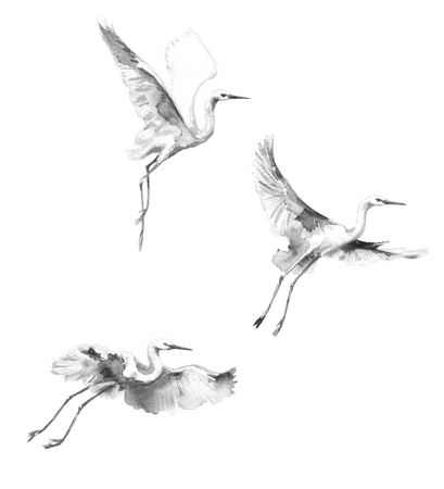 Watercolor painting.  Hand drawn illustration. White flying storks isolated on blank background. Bird flight monochrome aquarelle sketch.   Foto de archivo