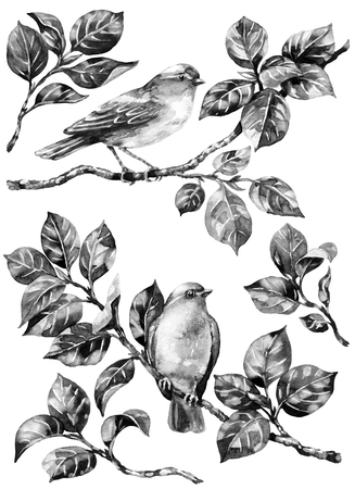Watercolor painting.  Hand drawn animalistic illustration. Monochrome forest birds and tree branches set. Couple songbirds and leaves set  isolated on white. Aquarelle sketch.
