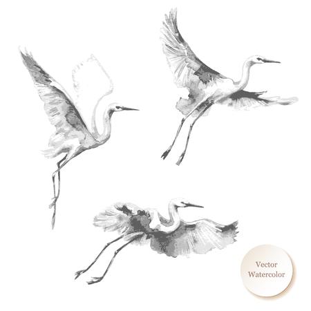 Aquarellmalerei. Hand gezeichnete Illustration. Fliegende Störche isoliert auf weißem Hintergrund. Einfarbige Vektorskizze des Vogelfluges.