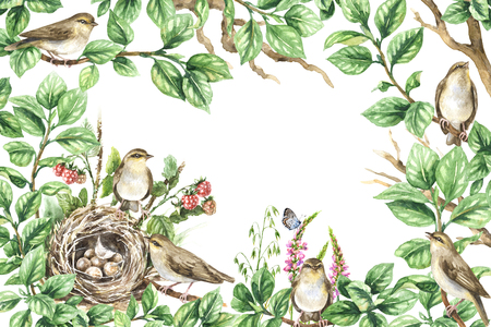 Watercolor painting. Horizontal rectangle frame with hand drawn songbirds, tree branches, nest, leaves, berries, flowers. Floral decorative background with plants, forest birds and space for text. Фото со стока