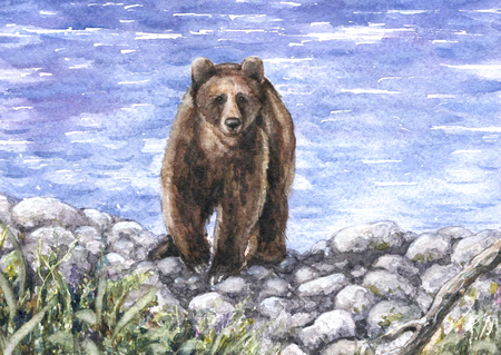 Watercolor Painting.  Hand drawn bear walking near the river. Stony waterside landscape.