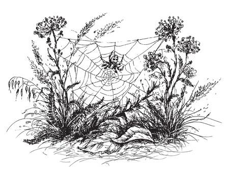 クモの巣、草や野生の花の手描きのスケッチ。黒と白の花のイラスト。