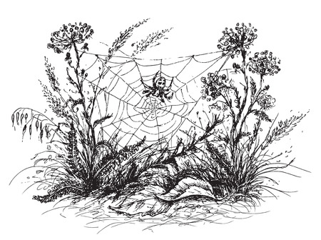 Hand drawn sketch of spider web, grass  and wildflowers. Black and white  floral illustration.