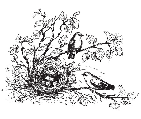 Hand drawn of couple songbirds and nest with eggs. Black and white illustration birds house on ground hidden in branches with leaves. Vector sketch.