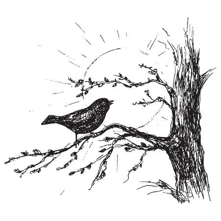 木の枝の上に座って手描きのソングバード。春が来るイラスト。黒と白の歌う鳥と太陽のベクトルスケッチ。